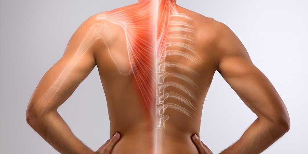 Dolor de espalda ¿Cómo funciona nuestra columna vertebral? - Paco Cara | Osteópata en Barcelona